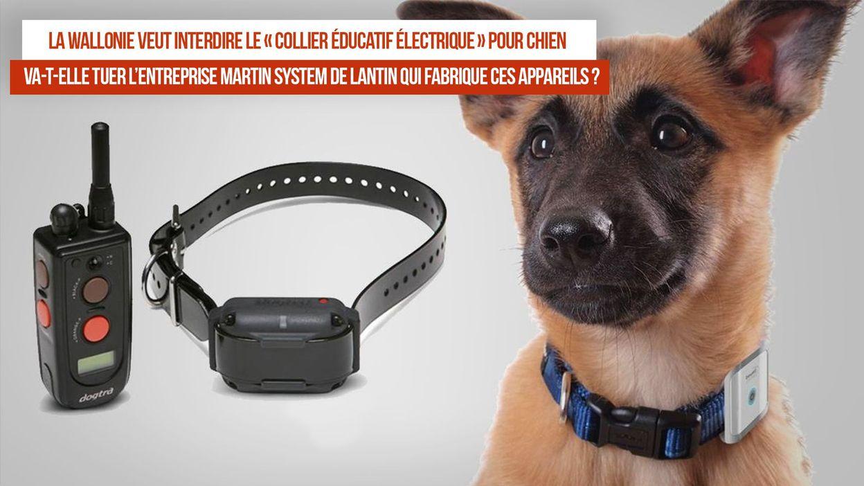 Collier electrique chien : la sélection des meilleures offres du moment